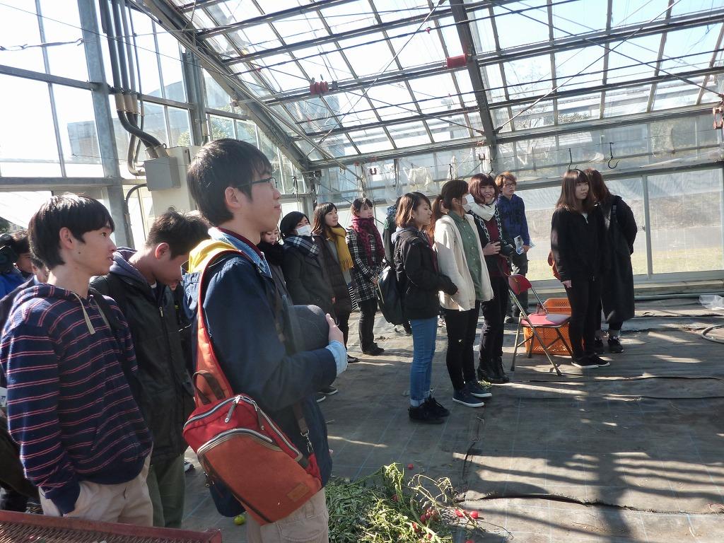 写真5.園芸経営学科におけるビニールハウスの見学をする学生たちです。